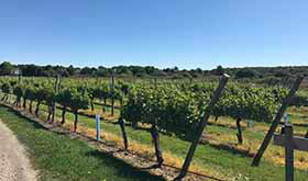 Conserve-Farm-Newport-Vineyards