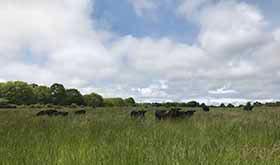 Conserve-Farm-Aquidneck
