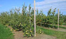 Conserve-Farm-Sweet-Berry