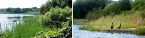 Aquidneck Watersheds