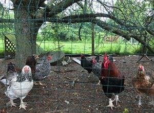 farmlink-homepage-conserved-farm