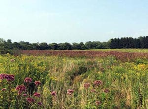 Aquidneck Farmlink Conserved Farm
