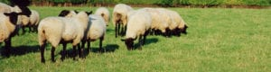 Aquidneck Farmlink Support
