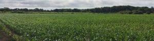 ALT Our Work Farmland