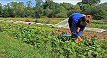 saving-ri-farms
