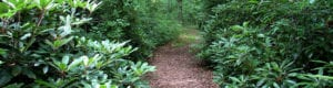 trails-Oakland-Forest-header