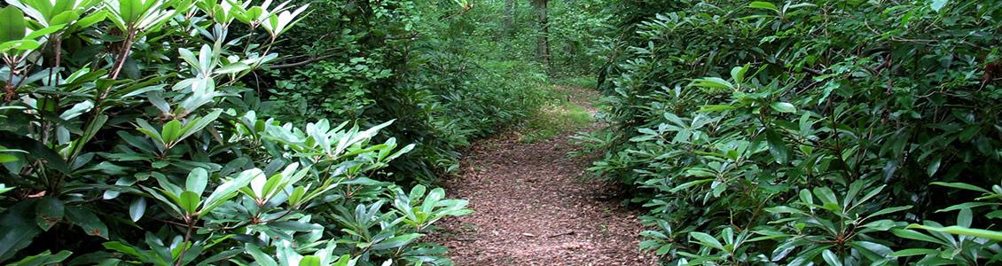 trails-Oakland-Forest-header