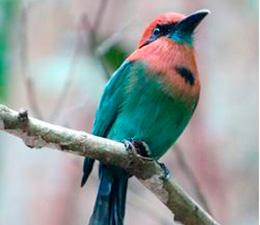 Bird-image-from-flyer-website
