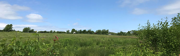 Glen Farm