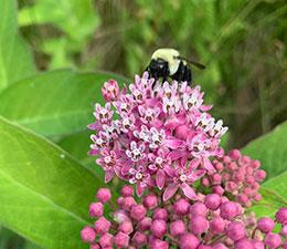 Pollinator Walk