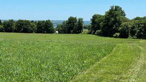 Rego Farmland